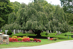Prosepct Cemetery Grounds